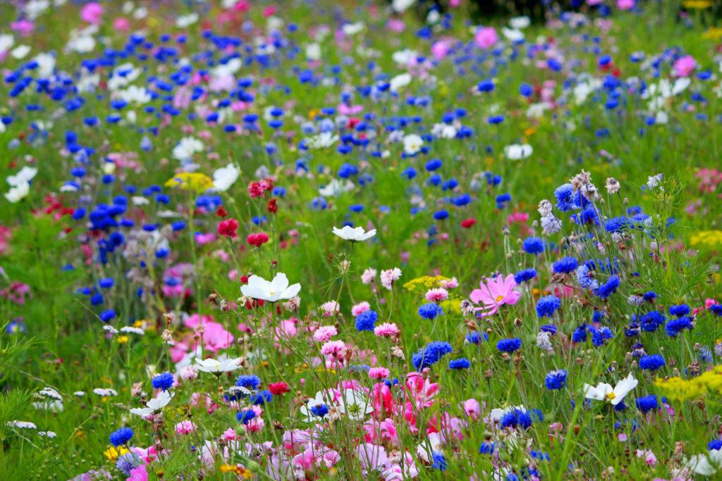 Wild flowers gardening